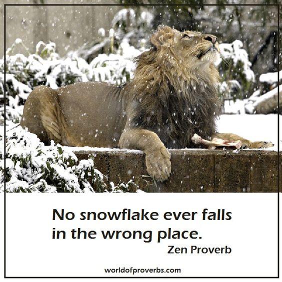 snowzen